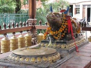 Detalle de un toro sagrado en un patio interior en Patán.